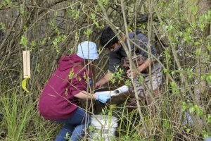 Students collect traps